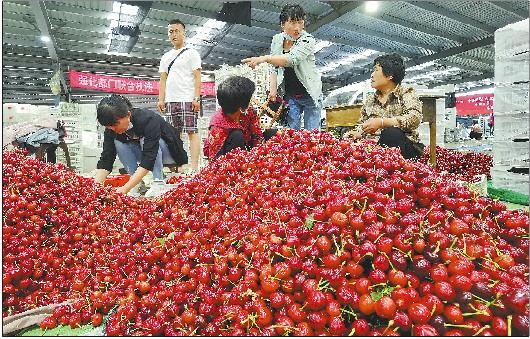 """水果界的""""流量明星"""",煙臺大櫻桃為啥這麼紅"""