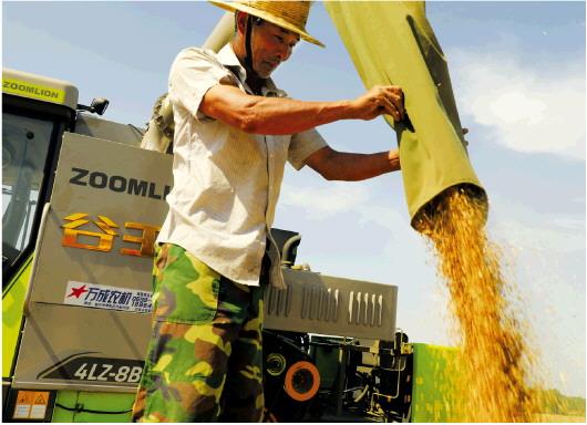 山東蘭陵小麥收割工作全面展開