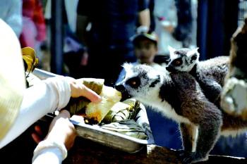 山東煙臺:動物們享受粽子大餐 模樣呆萌