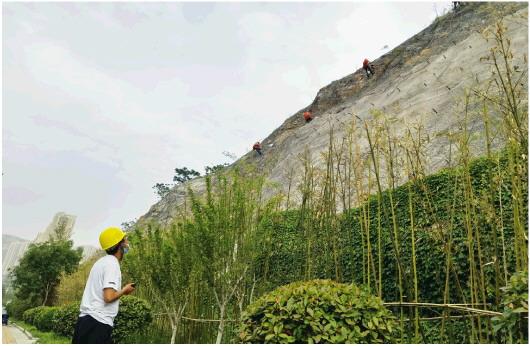 濟南:40多米高斷崖採用噴播技術實施綠化